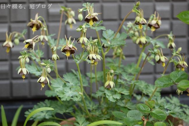 f:id:m-garden-life:20190417180821j:plain