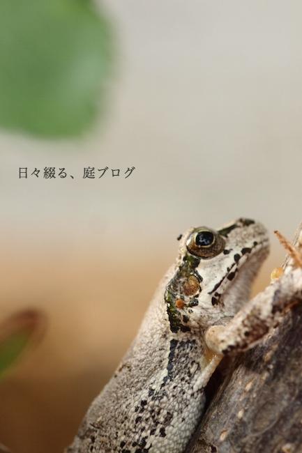 f:id:m-garden-life:20190417181019j:plain