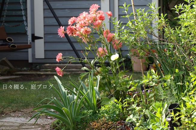 f:id:m-garden-life:20190419125214j:plain