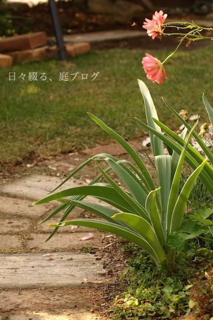 f:id:m-garden-life:20190419125701j:plain
