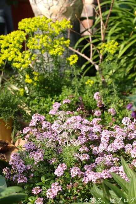 f:id:m-garden-life:20190419130444j:plain