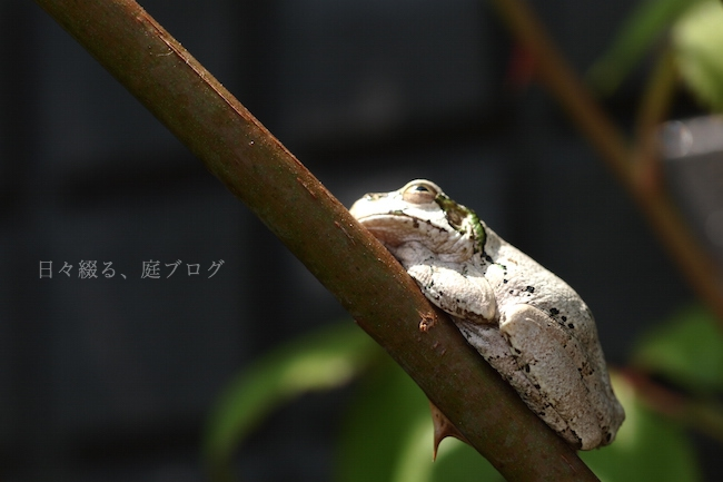f:id:m-garden-life:20190419130852j:plain