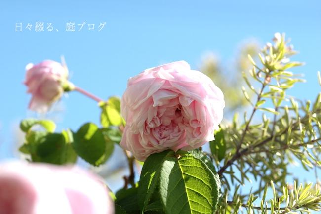 f:id:m-garden-life:20190519081625j:plain