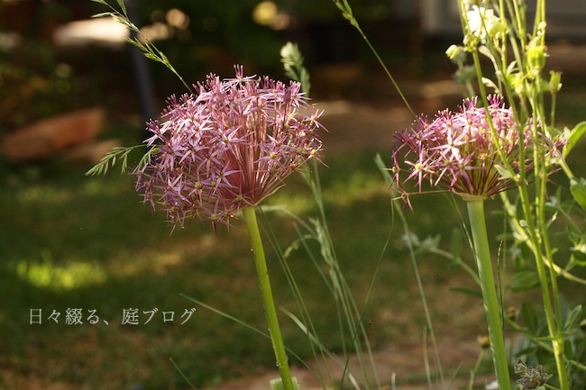 f:id:m-garden-life:20190519084341j:plain