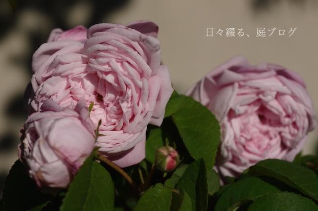 f:id:m-garden-life:20190519090326j:plain
