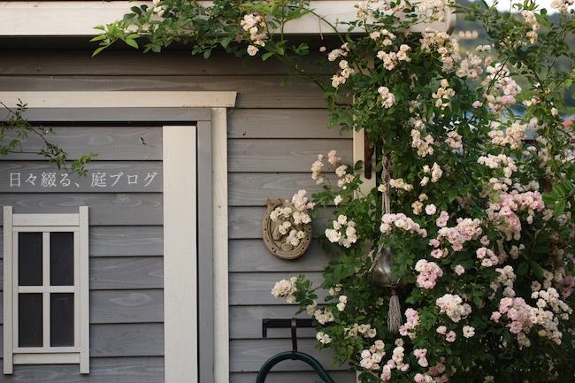f:id:m-garden-life:20190523164917j:plain