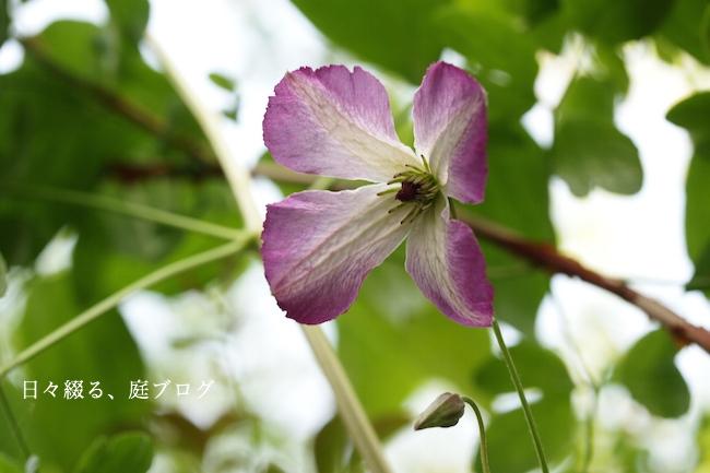 f:id:m-garden-life:20190523164938j:plain