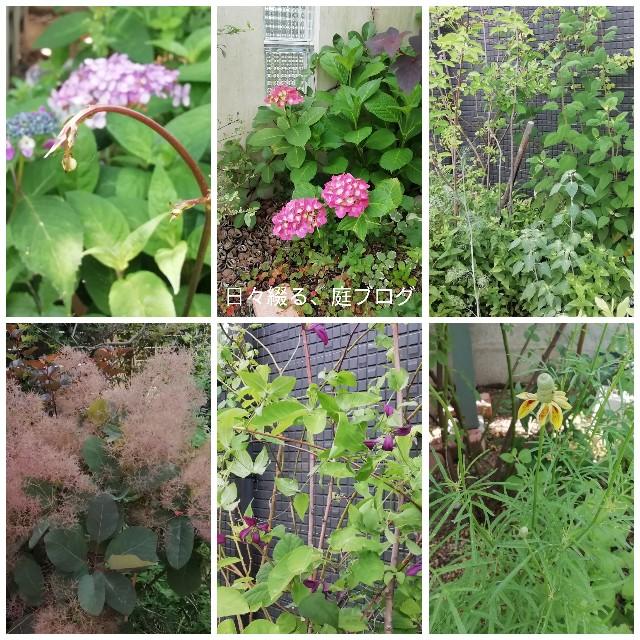 f:id:m-garden-life:20190603194111j:image