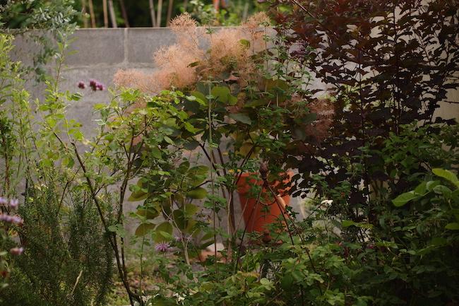 f:id:m-garden-life:20190614085520j:plain