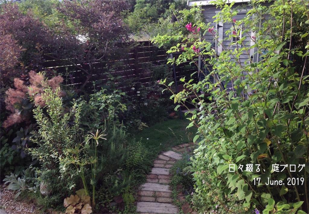 f:id:m-garden-life:20190617103810j:image