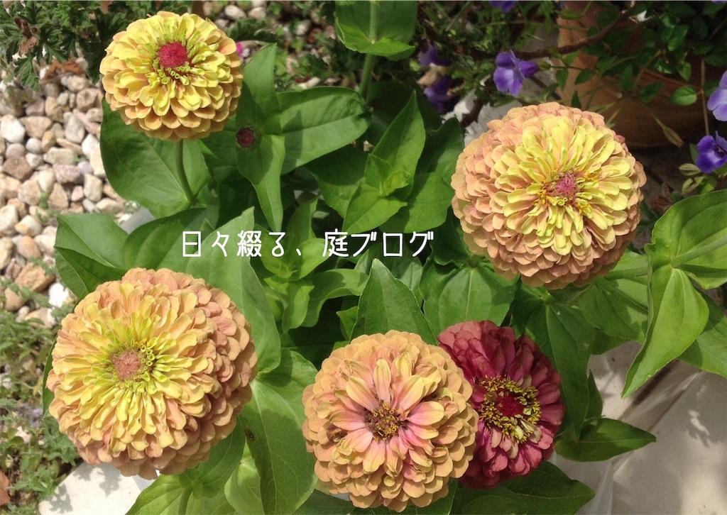 f:id:m-garden-life:20190617103816j:image