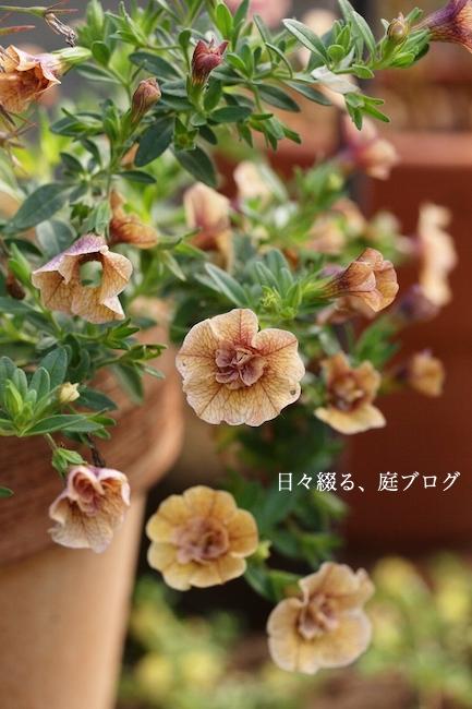 f:id:m-garden-life:20190617172142j:plain