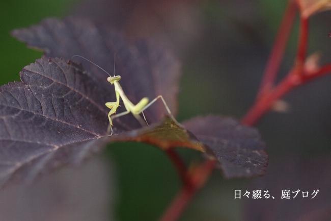 f:id:m-garden-life:20190617172431j:plain