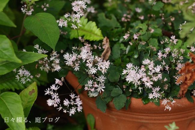 f:id:m-garden-life:20190617172637j:plain