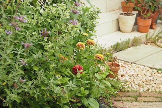 f:id:m-garden-life:20190621193633j:plain