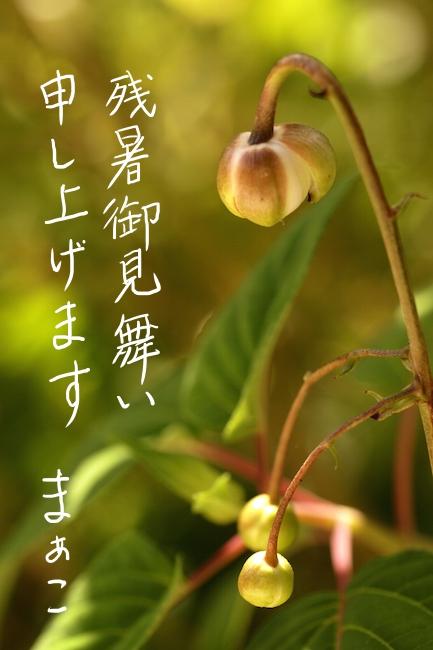 f:id:m-garden-life:20190809092542j:plain