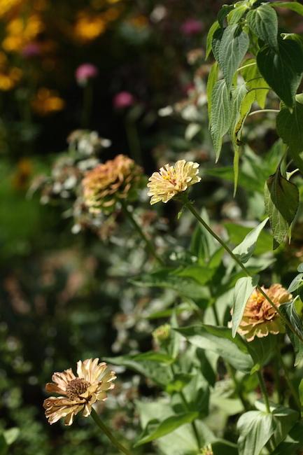 f:id:m-garden-life:20190809093832j:plain