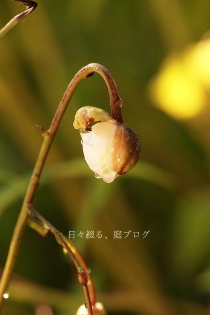 f:id:m-garden-life:20190814081620j:plain