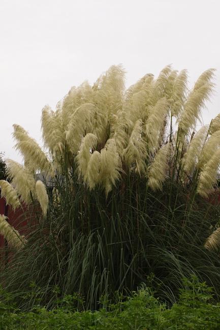 f:id:m-garden-life:20190901094715j:plain