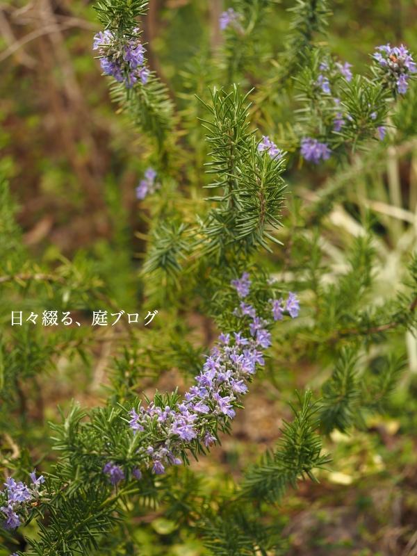 f:id:m-garden-life:20200329103821j:plain
