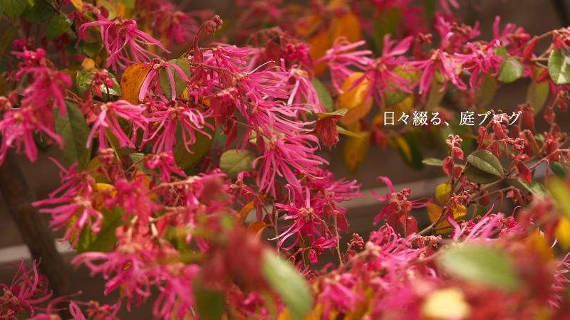 f:id:m-garden-life:20200329103948j:plain