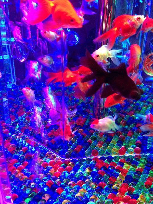 アートアクアリウム、金魚<カレイドリウム3D>