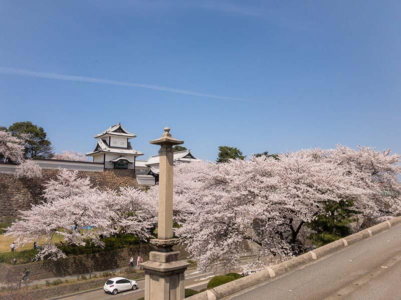 兼六園と桜と金沢城