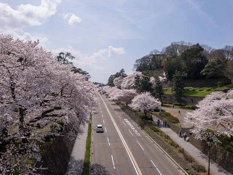 百間堀と桜