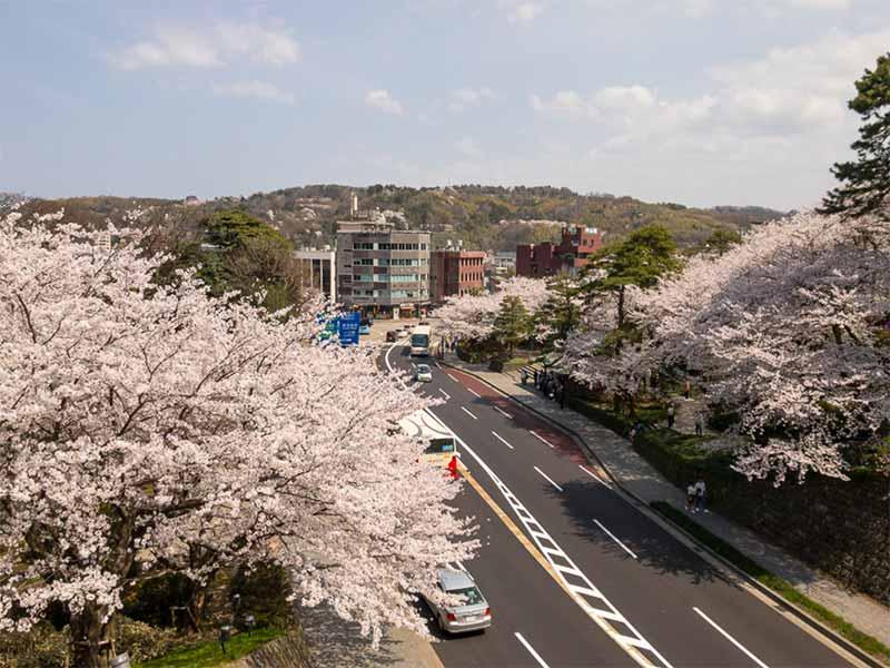 百間堀と桜と兼六園