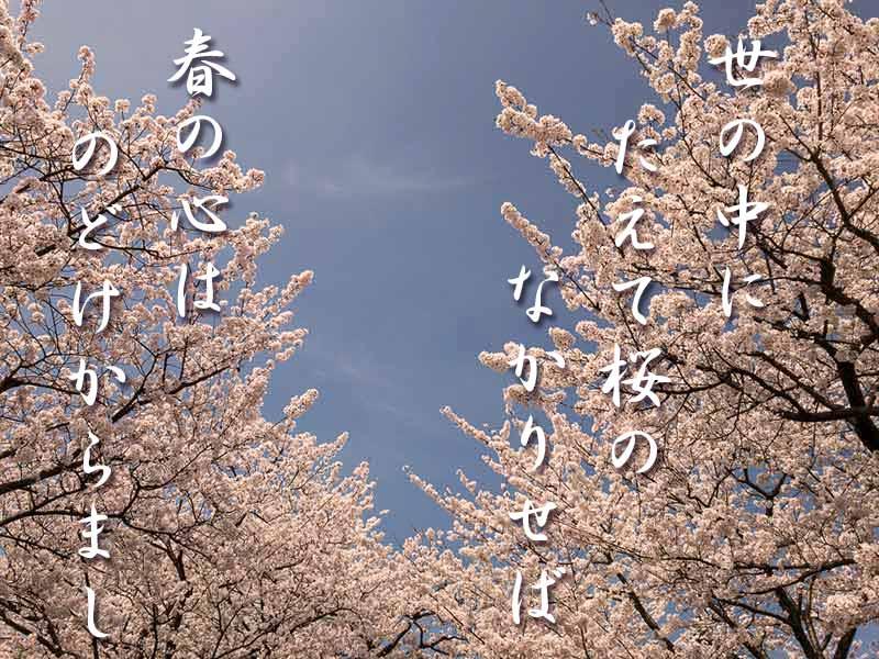 桜 在原業平