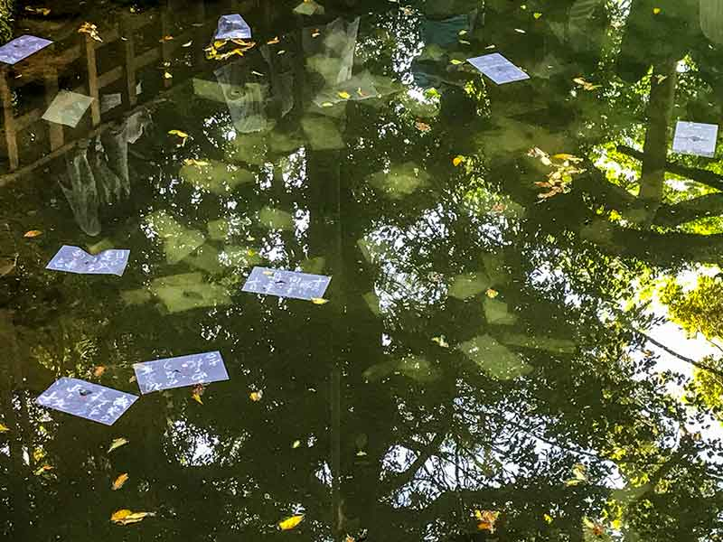 八重垣神社・鏡の池の縁占い