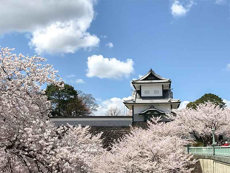 桜と石川門と兼六園