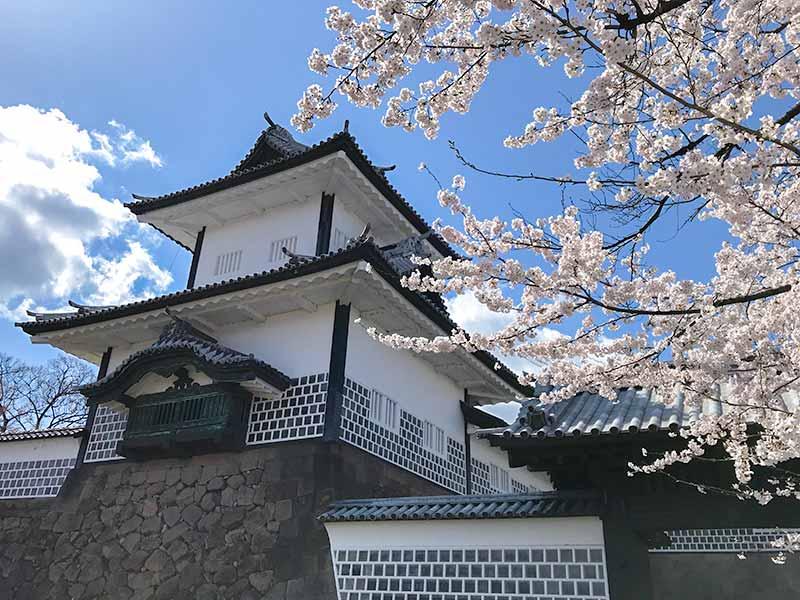 花見、桜と石川門