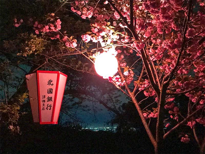倶利伽羅不動寺・八重桜