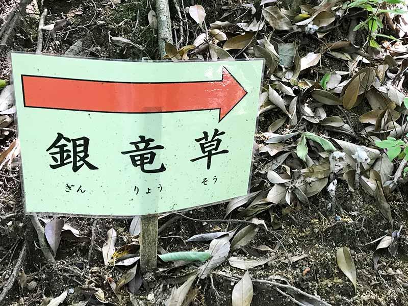 奈良・大神神社・天皇社
