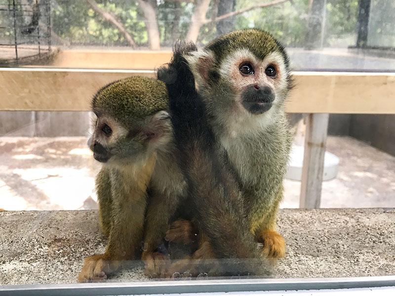 いしかわ動物園リスザル