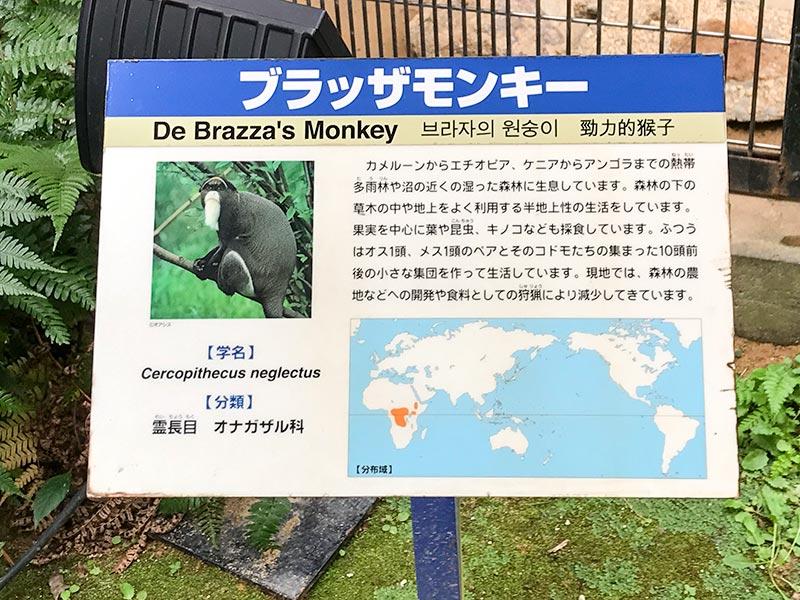 いしかわ動物園ブラッザモンキー