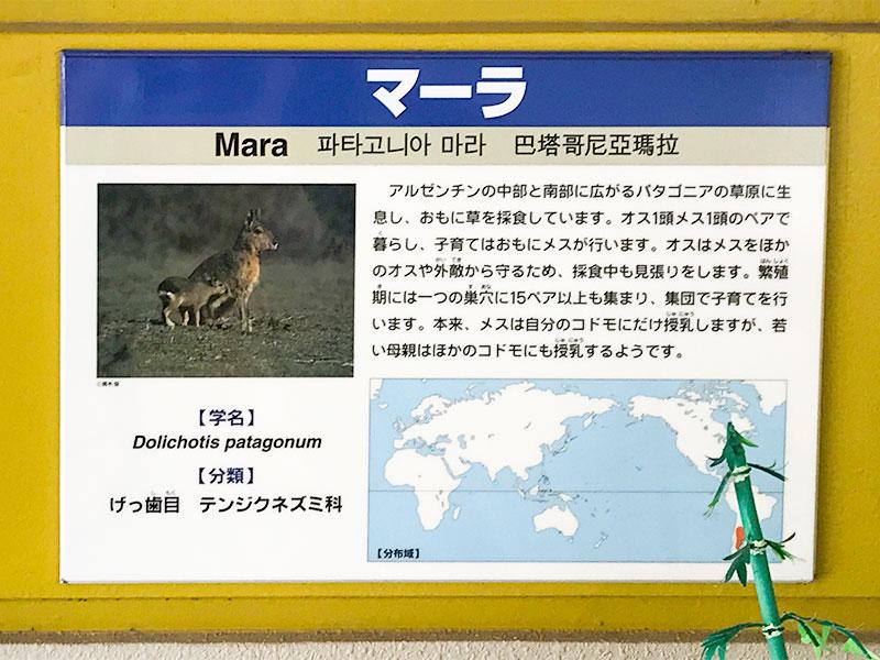 いしかわ動物園マーラ