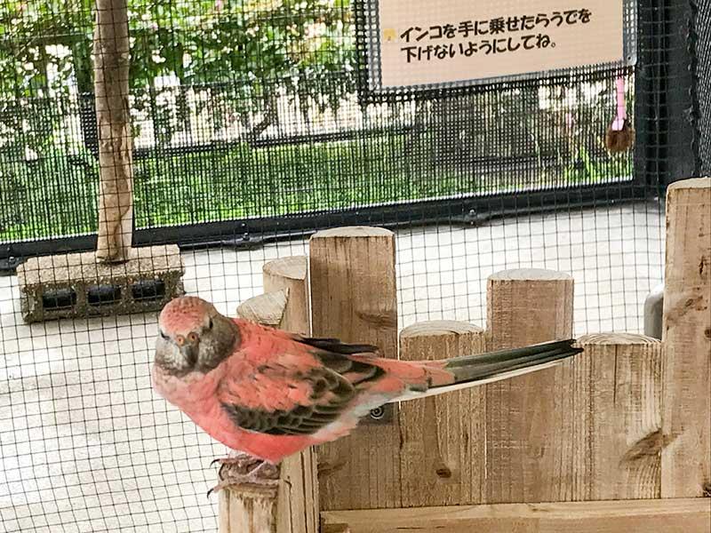 いしかわ動物園インコ