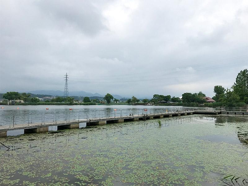 木場潟(石川県小松市)ウォーキング