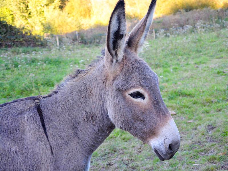 Donkeysyears(とても長い間)