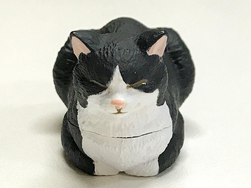 香箱座りの猫の小箱ハチワレ