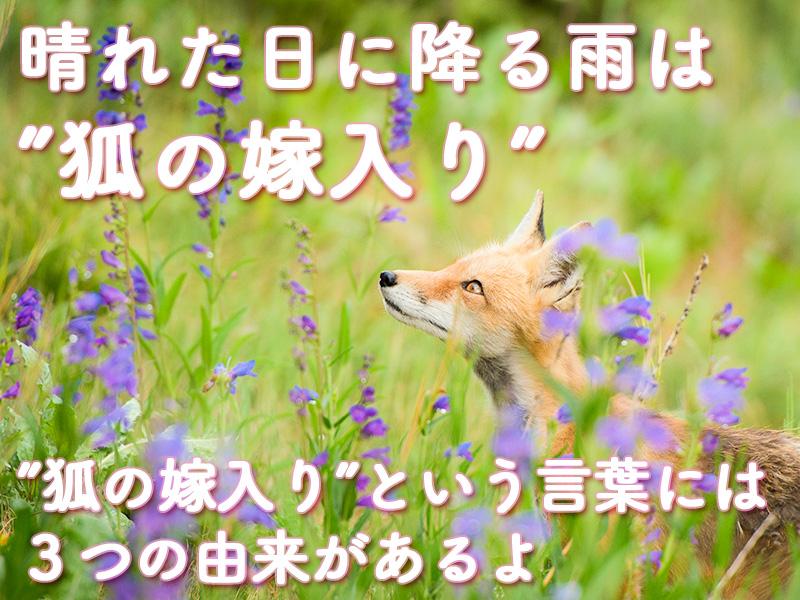 狐の嫁入りのお話3つの由来