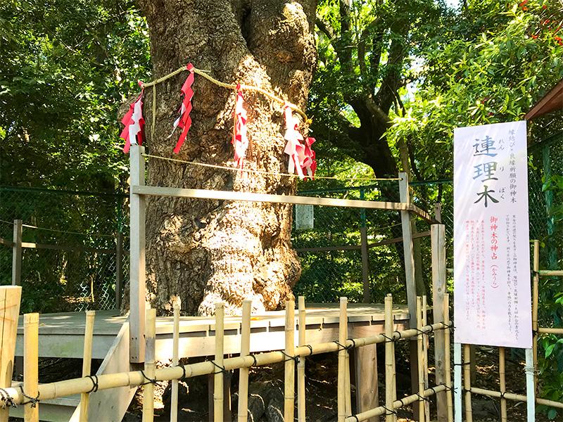 城山八幡宮・連理木