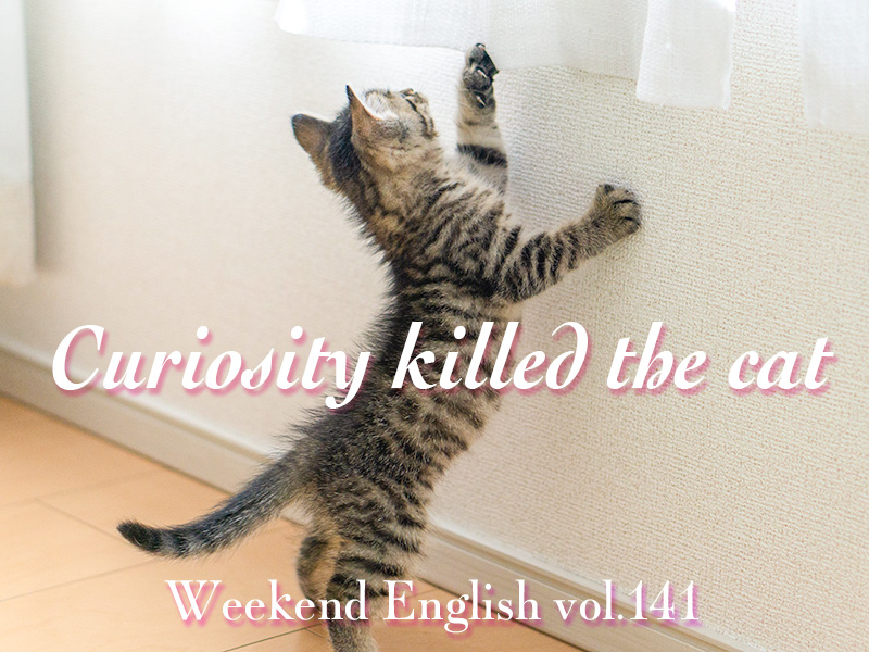 週末英語(weekend english)curiosity killed the cat(好奇心は猫を殺す)