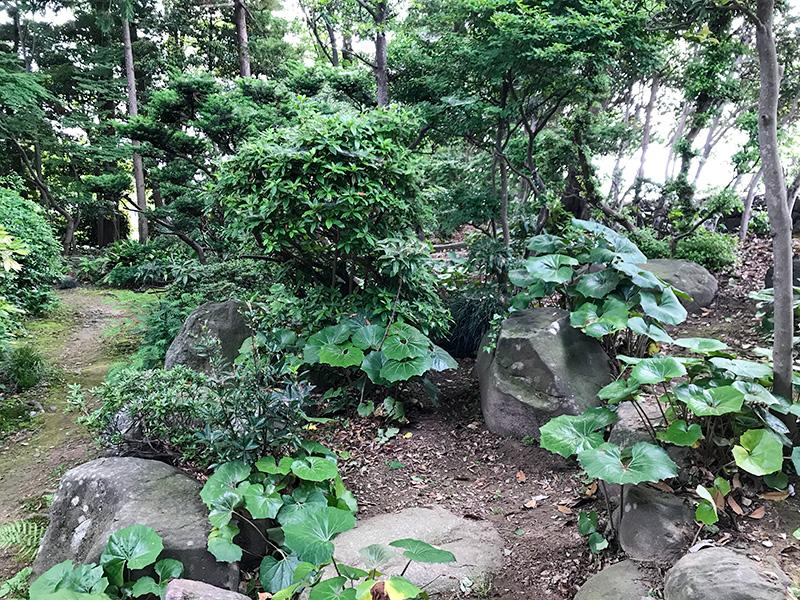 石川県野々市市「Tree+ing Cafeフクロウの森」