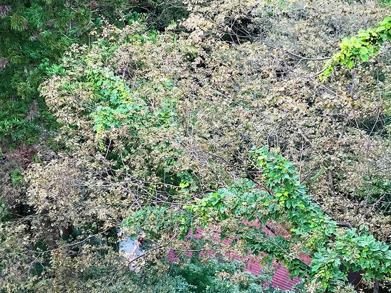 山中温泉湯畑の宿「花つばき」