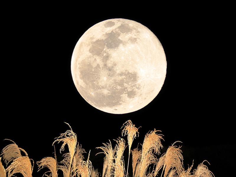 中秋の名月(harvest moon)