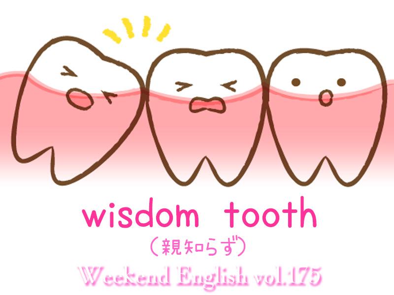 週末英語(weekend english)親知らず(wisdom tooth)
