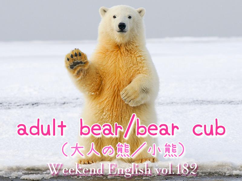 週末英語(weekend english)大人の熊は(adult bear)小熊(bear cub)